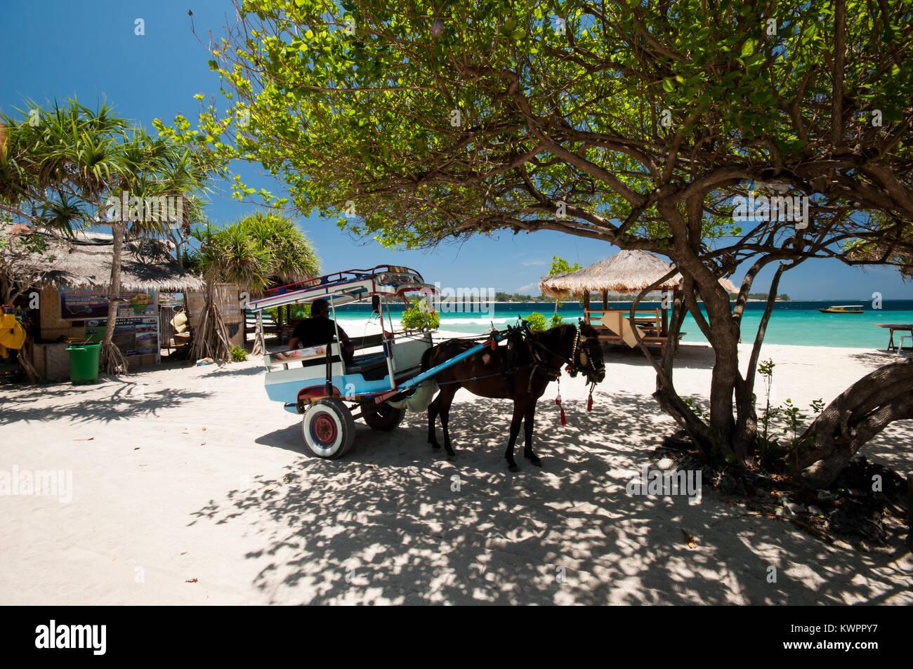 Indonesia, Lombok, Gili arcipelago, Gili Meno, l'unico mezzo di trasporto è il cidomo, carro trainato da Immagini Stock