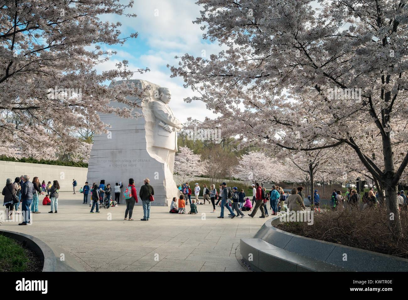 WASHINGTON DC - MARZO 29, 2017 - ciliegi fioriti e turisti circondano il Martin Luther King Jr. Monumento al bacino di marea in Potomac Park. Foto Stock
