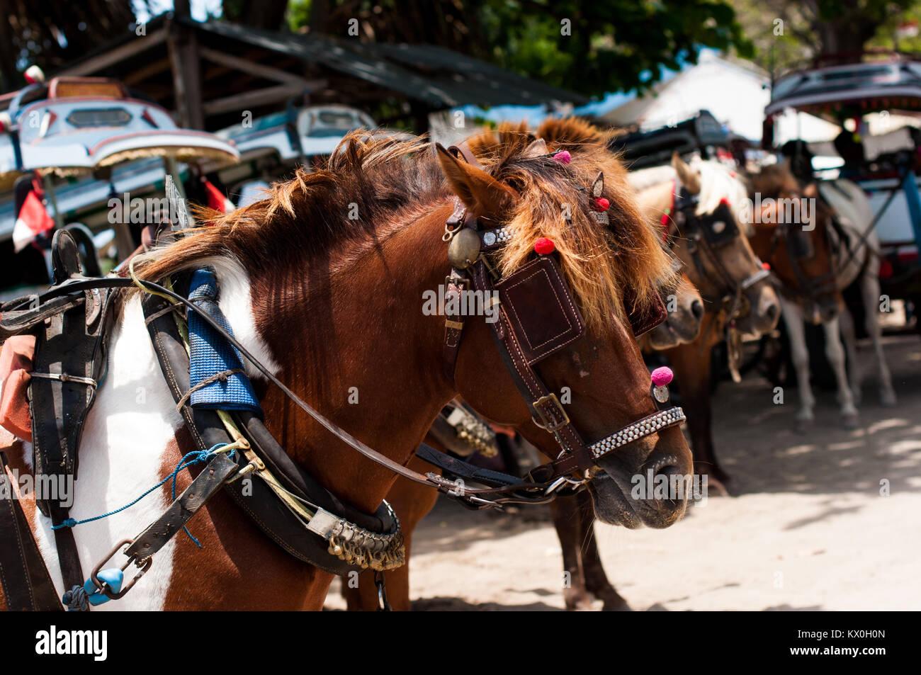 Indonesia, Lombok, Gili arcipelago, Gili Air, l'unico mezzo di trasporto è il cidomo, carro trainato da Immagini Stock