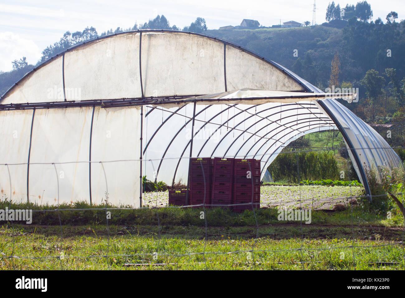 Tunnel Plastica Per Ortaggi.Serra Di Plastica Per La Coltivazione Di Ortaggi Biologici Nelle