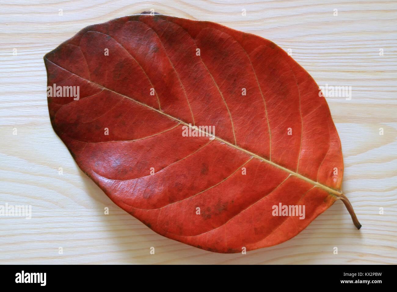 Si E Chiusa La Texture E Pattern Di Colore Rosso Caduto Foglia Secca Su Un Tavolo Di Legno Foto Stock Alamy