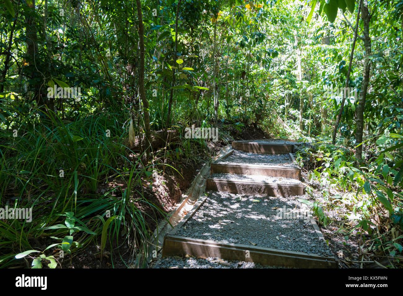 Percorso escursionistico, parco nazionale Manuel Antonio, Costa Rica Immagini Stock