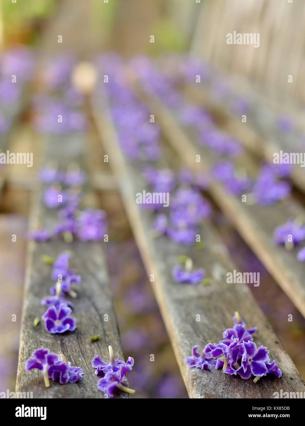 Cerca Rustico Panca Di Legno Ricoperto Di Fiori Viola Sunshine