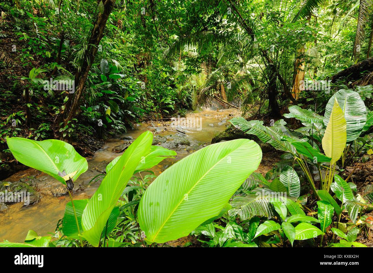 Wild Darien la giungla vicino la Colombia e il Panama confine. America centrale. Immagini Stock