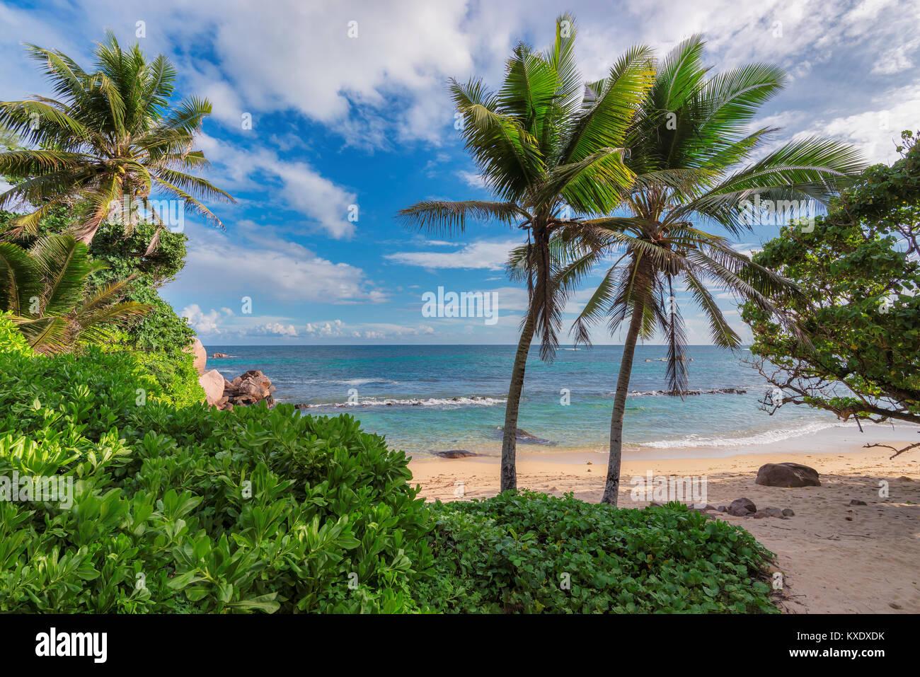 Bella vista di una selvaggia spiaggia tropicale nella parte meridionale di Saychelles nella giornata di sole. Immagini Stock