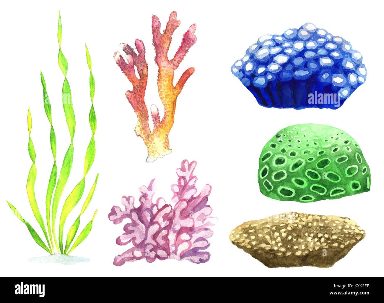 Acquerello Illustrazione Di Corallo E Alghe Raccolta Di Piante Di