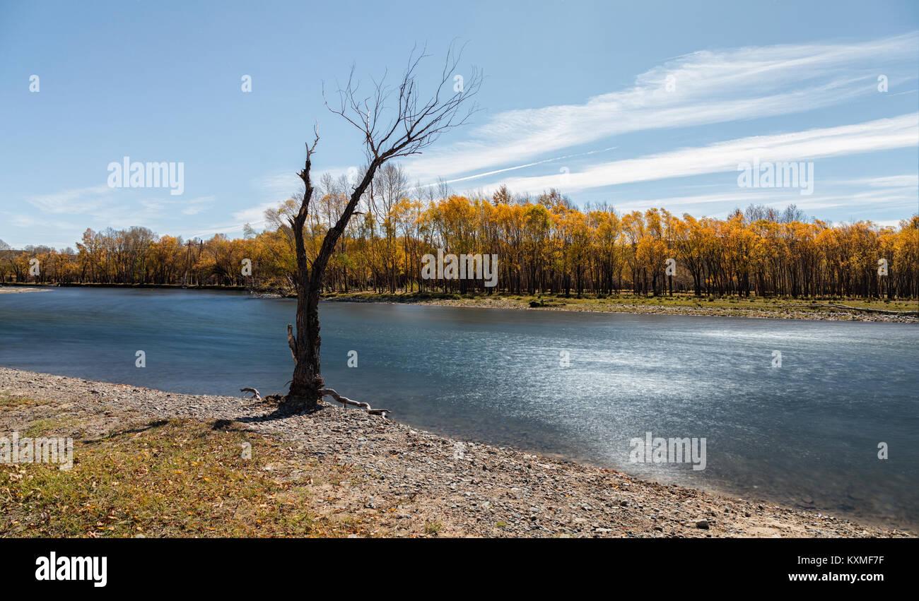 Albero morto in piedi in riva al fiume giallo di foglie cadere il filtro ND con esposizione lunga Immagini Stock