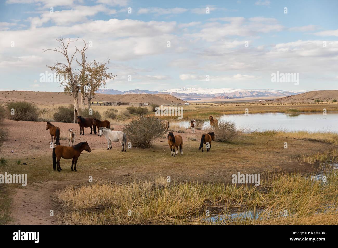 Cavalli a riposo della Mongolia Mongolia banca di fiume Foto Stock