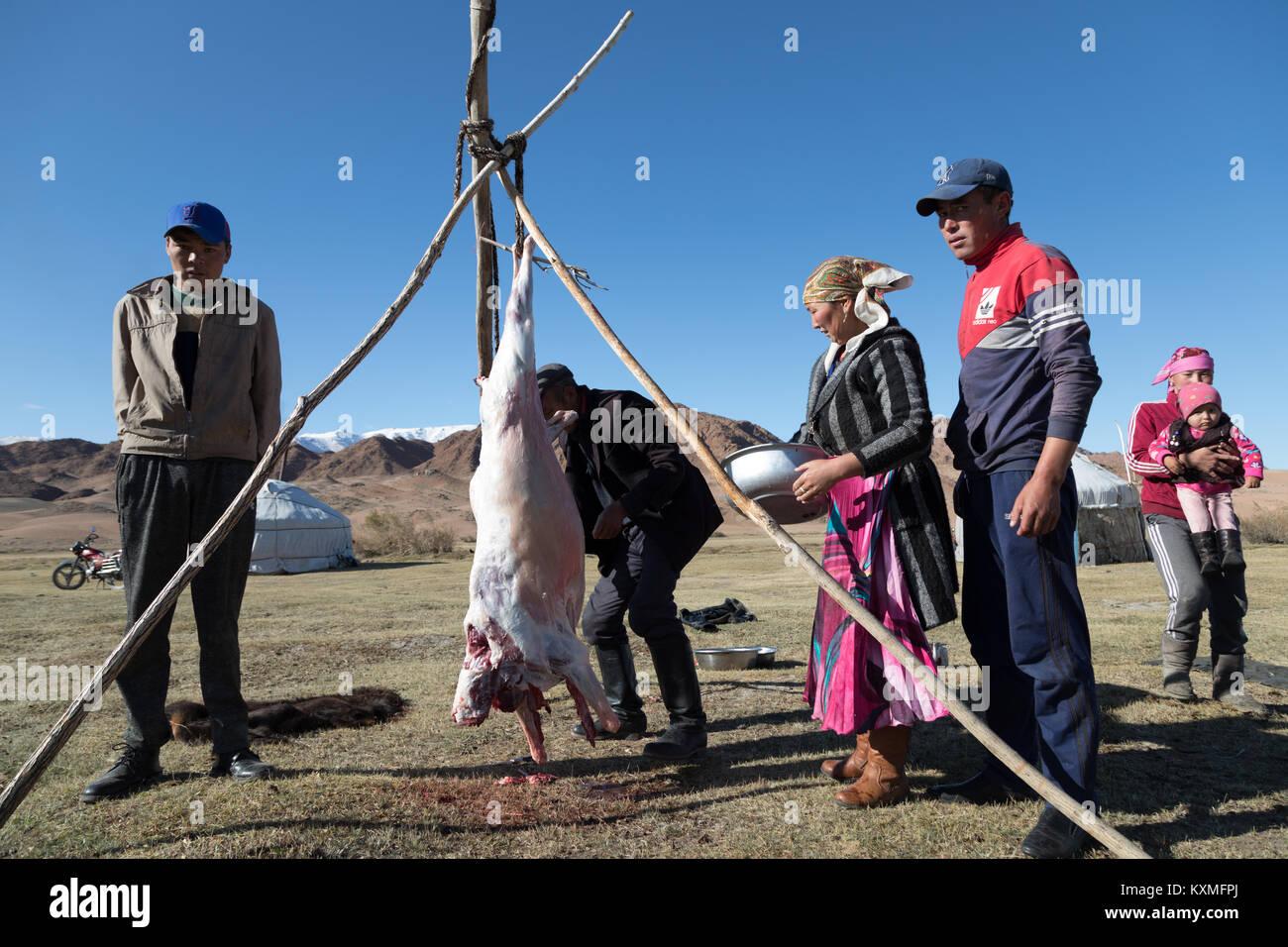 Il mongolo eagle hunter famiglia macellazione carne di pecora Mongolia ger Immagini Stock