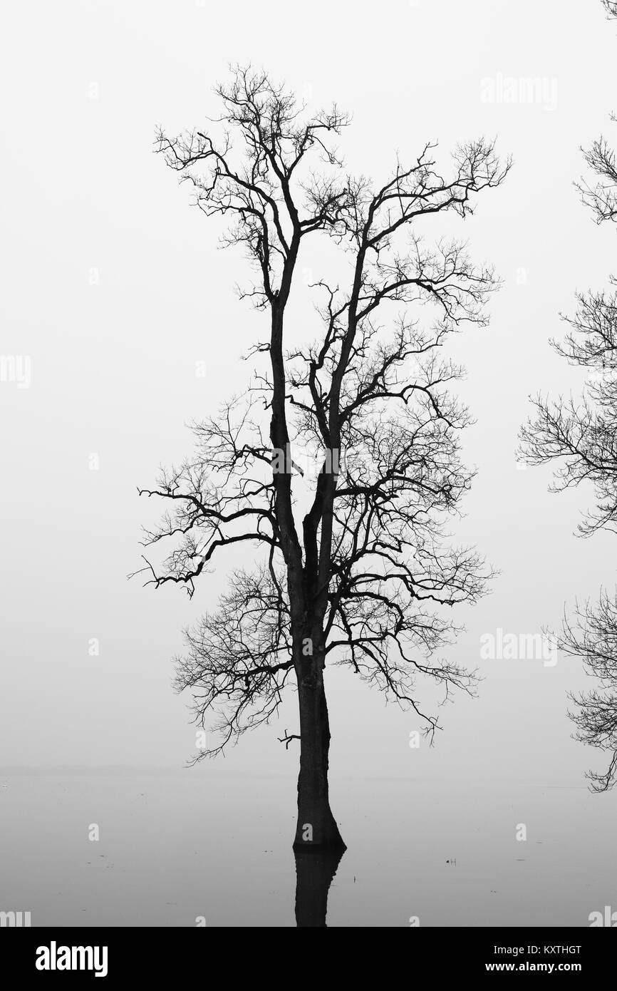 Silhouette ad albero nel campo inondato Immagini Stock