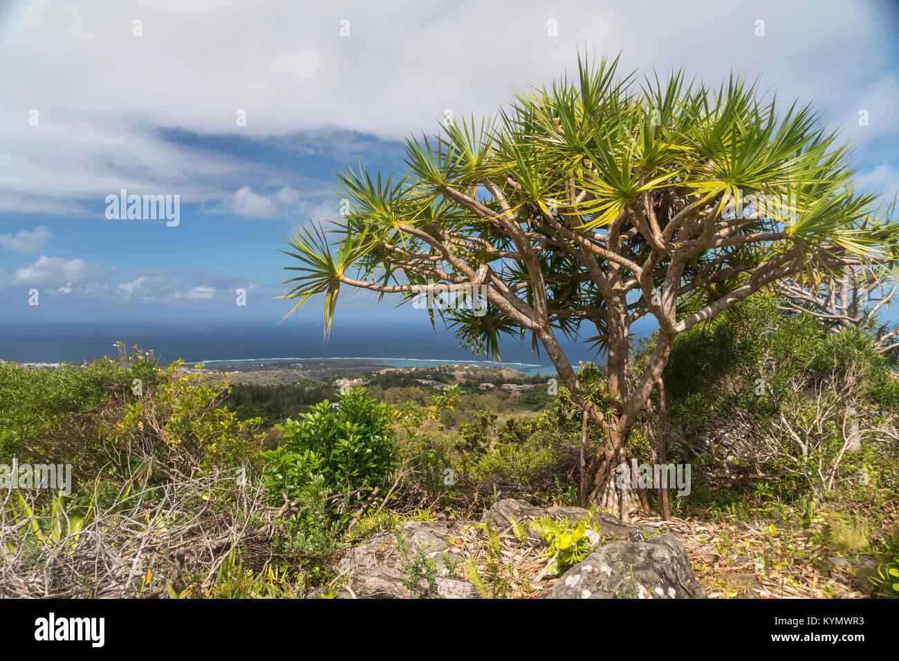 Grand Montagne riserva naturale, Insel Rodrigues, Mauritius, Afrika, | Grand Montagne riserva naturale, isola Rodrigues, Immagini Stock