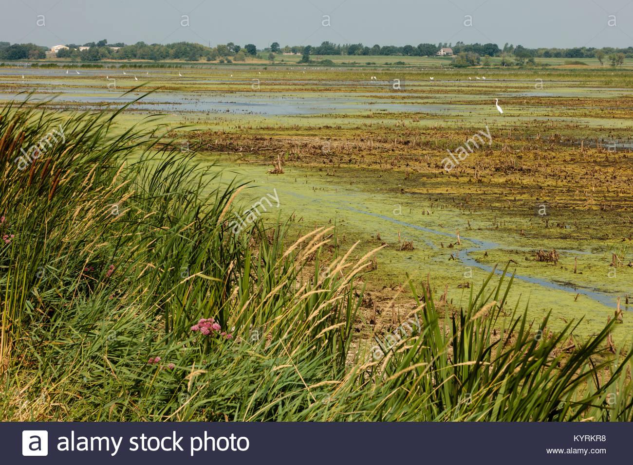 Affacciato sulla Horicon Marsh a nord della Hwy 47, trascinata verso il basso durante le estreme condizioni di siccità Immagini Stock
