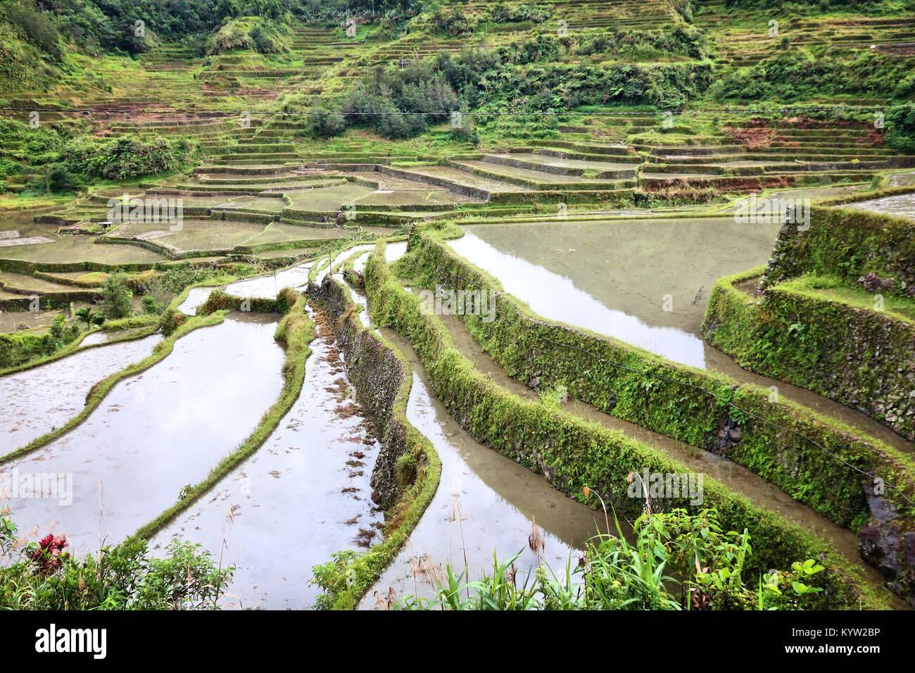 Filippine terrazze di riso - La coltivazione del riso nel villaggio ...