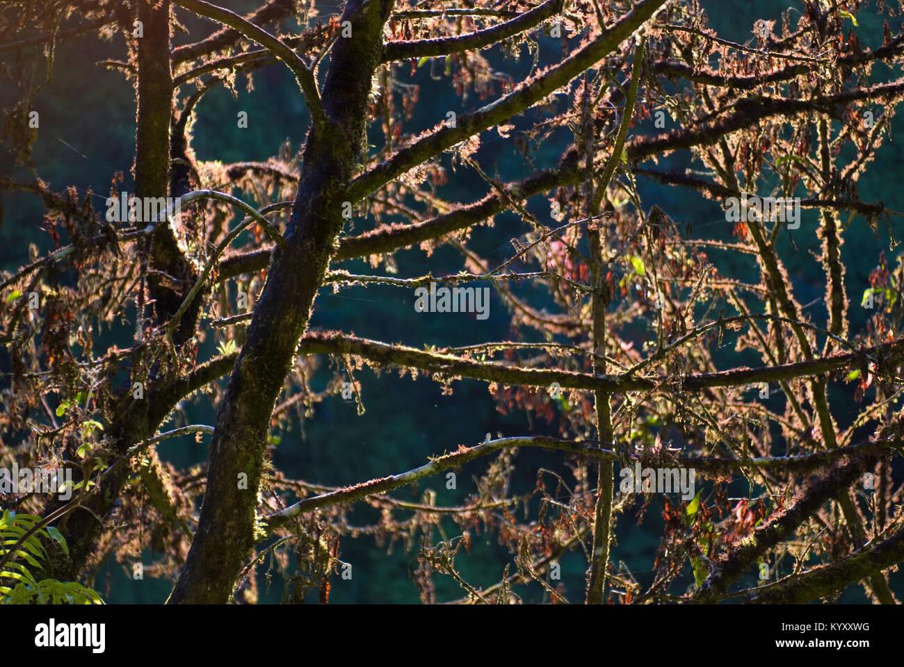 Close-up di alberi durante la giornata di sole Immagini Stock