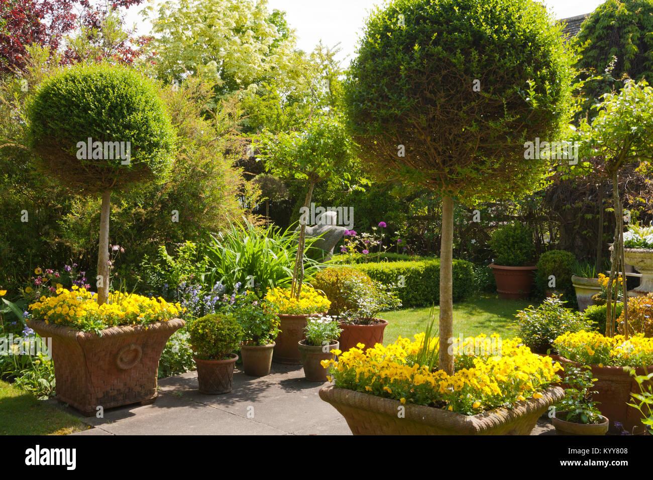 Piccoli Alberi Da Giardino piccoli alberi da giardino immagini & piccoli alberi da