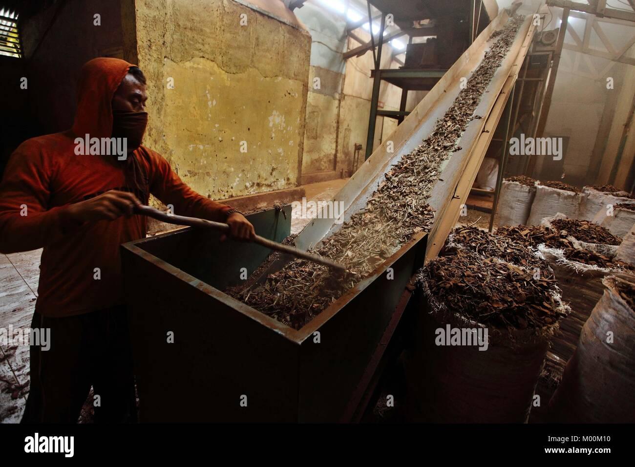 (180117) -- BANDUNG, Gennaio 17, 2018 (Xinhua) -- Un woker produce polvere di chinino da corteccia di China a PTPN Immagini Stock