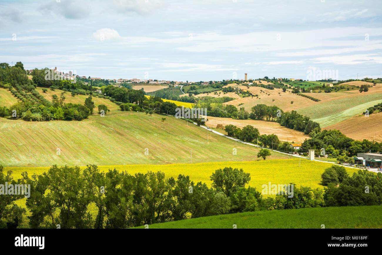 Rurali paesaggio estivo con campi di girasoli e campi di ulivi ...