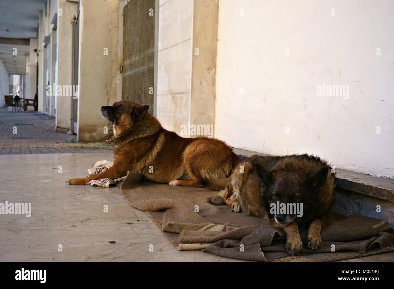 Cane Meticcio Immagini Cane Meticcio Fotos Stock Alamy