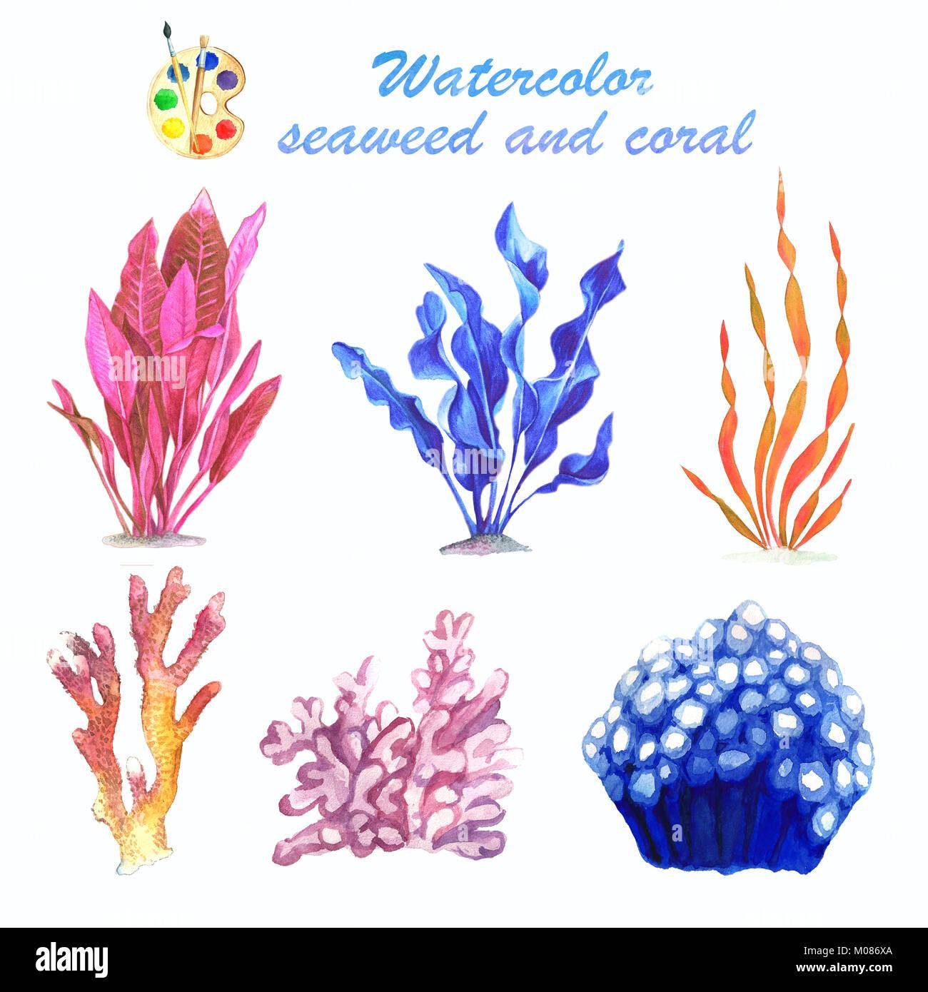 Una Serie Di Acquerelli Di Immagini Di Alghe Coralline E Su Uno