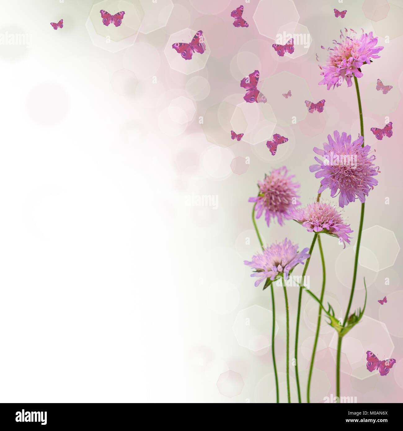 Blossom Sfondo Sfocato Bordo Floreale Di Fiori E Di Farfalla
