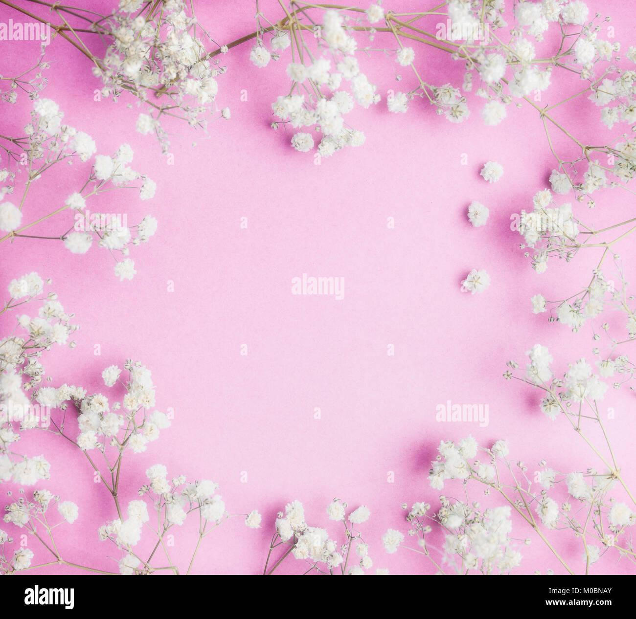 Grazioso Piccolo White Gypsophila Fiori Su Sfondo Rosa Graziosa