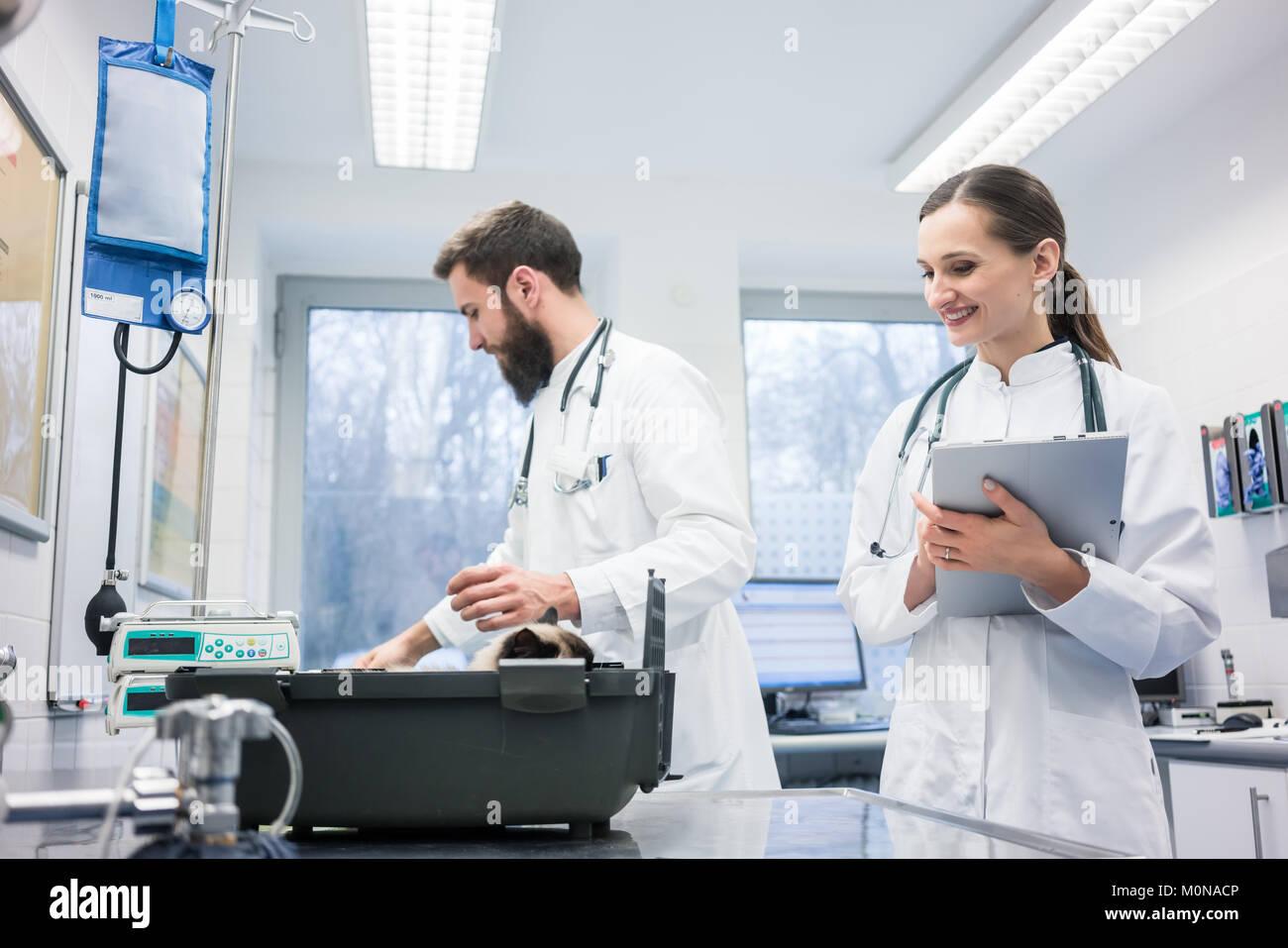 Vet medici nella loro clinica con un gatto paziente Immagini Stock