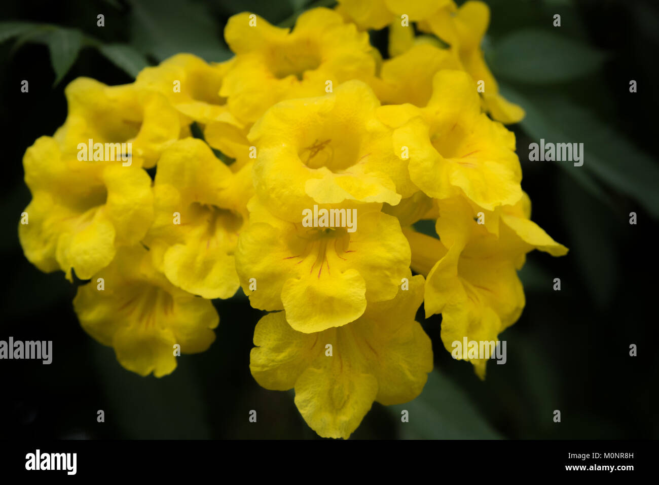 Fiori Gialli Bellissimi.Close Up Di Un Gruppo Di Bellissimi Fiori Gialli Foto Immagine