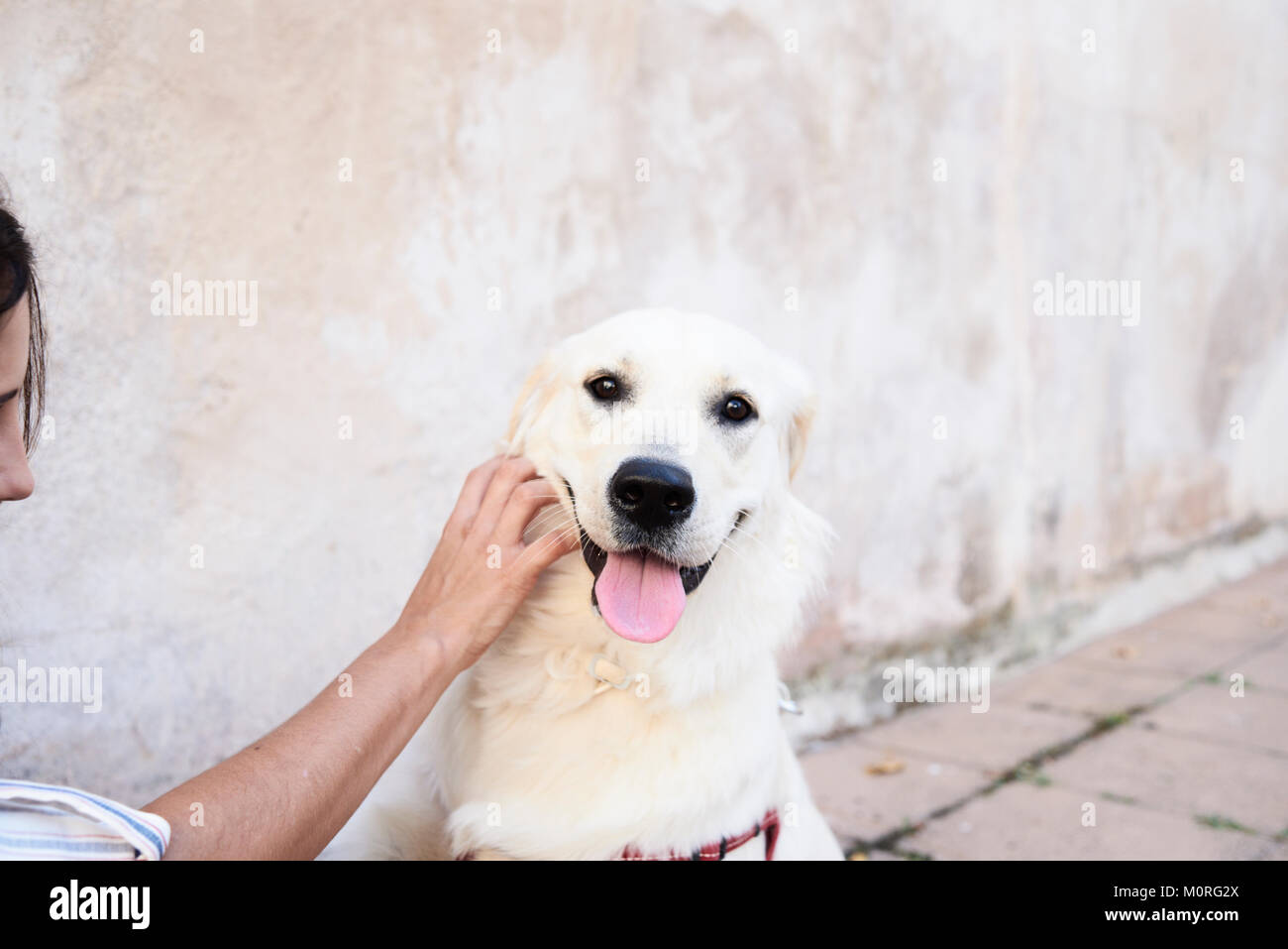 Ragazza giovane dando coccole per un Golden cane in strada contro la parete di color pastello. Immagini Stock