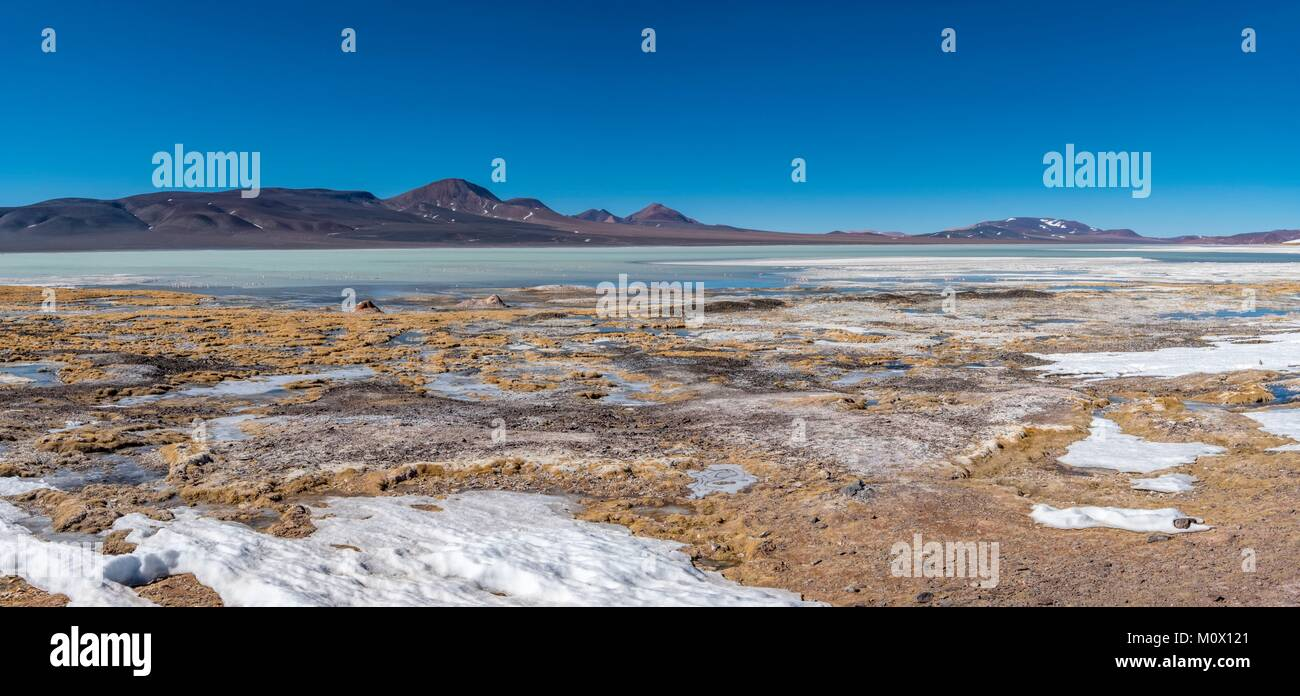 L'Argentina,La Rioja provincia,Laguna Brava Riserva Provinciale,James flamingo (Phoenicoparrus jamesi) Foto Stock