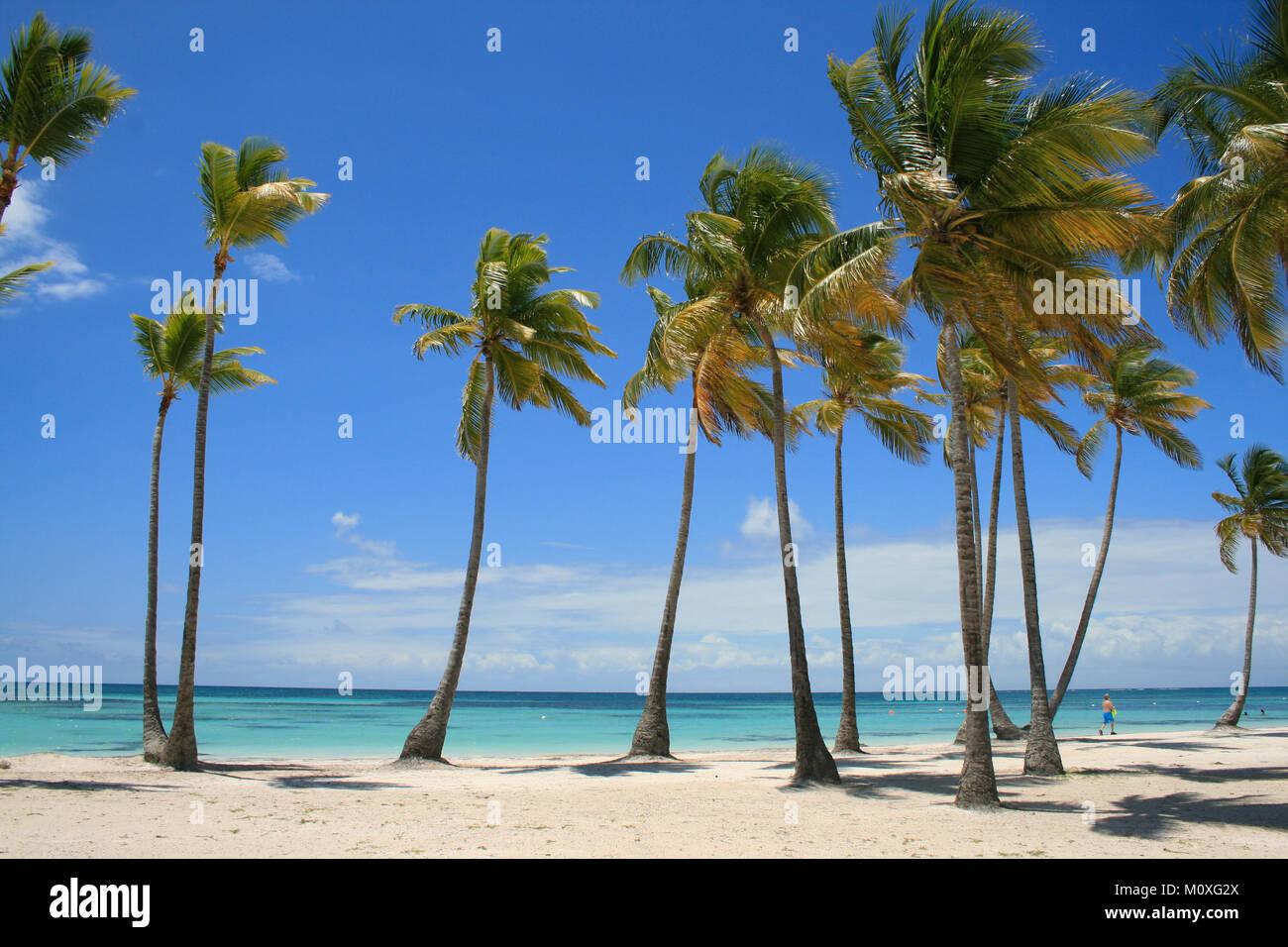 Spiaggia caraibica piena di Palme a Cap Cana Repubblica Dominicana Immagini Stock