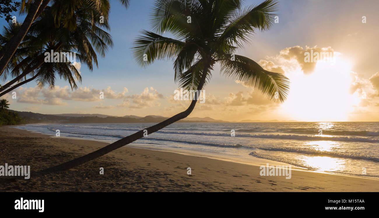Tramonto, Paradise beach e palme, Martinica isola. Immagini Stock