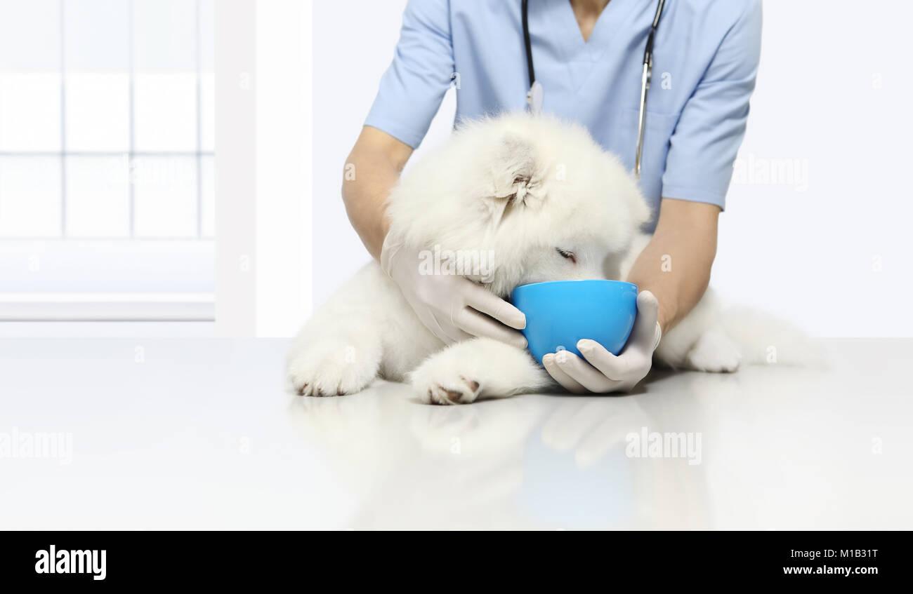 Clinicamente testato i prodotti esame veterinario cane, con kibble cibo secco nel recipiente, sul tavolo in clinica Immagini Stock