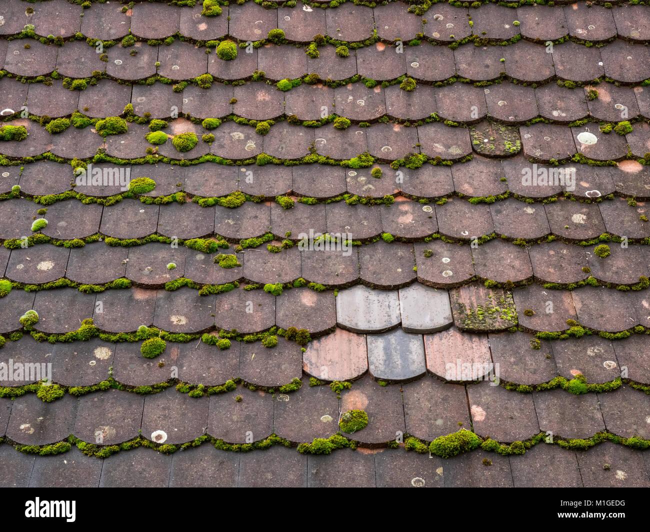 Il vecchio tetto di muschio di piastrelle con una piccola area di