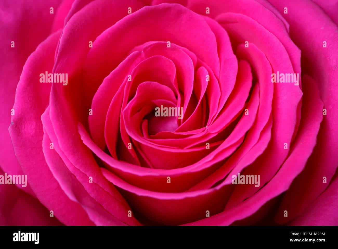 Valentines Day Card La Festa Della Mamma Giorno Womans Messa A
