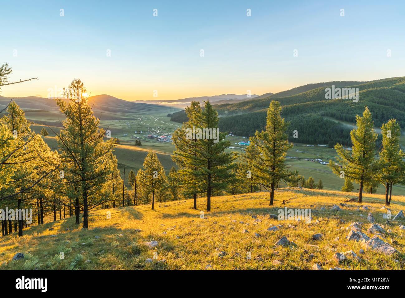 Abeti nella luce del mattino al di sopra di Tsenkher Hot Springs, Nord provincia Hangay, Mongolia, Asia Centrale, Asia Foto Stock