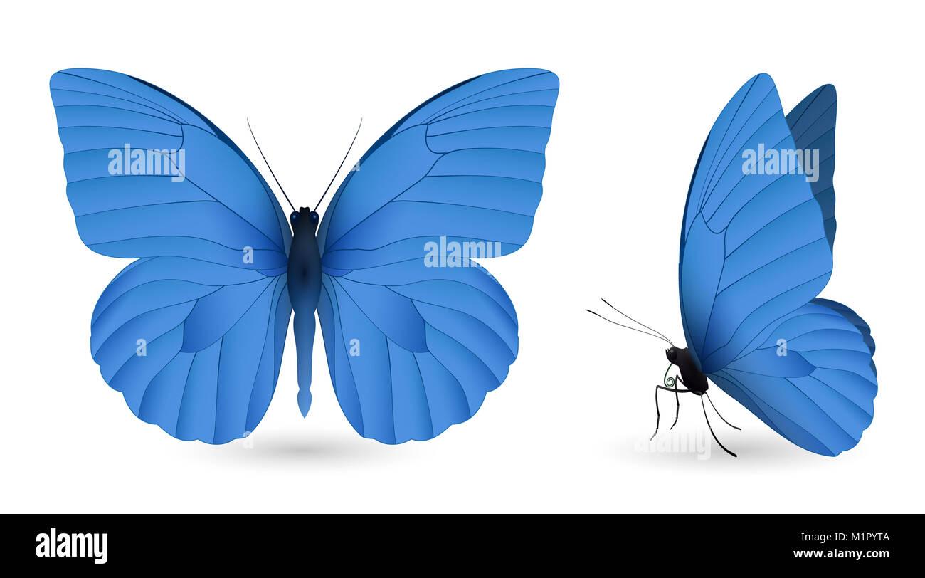 Set Di Farfalle Blu Isolato Su Uno Sfondo Bianco Appias Nero