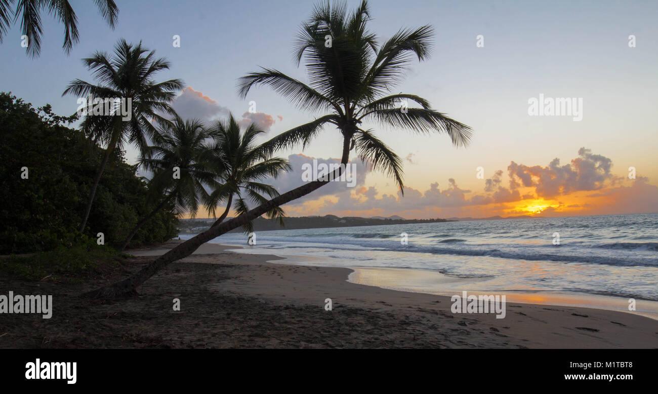 Tramonto, Paradise beach e Palm tree, Martinica isola. Immagini Stock
