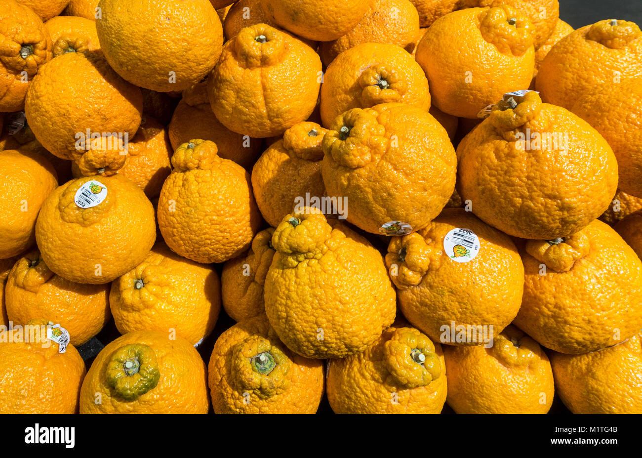 California Sumo arance in una New York supermercato Immagini Stock