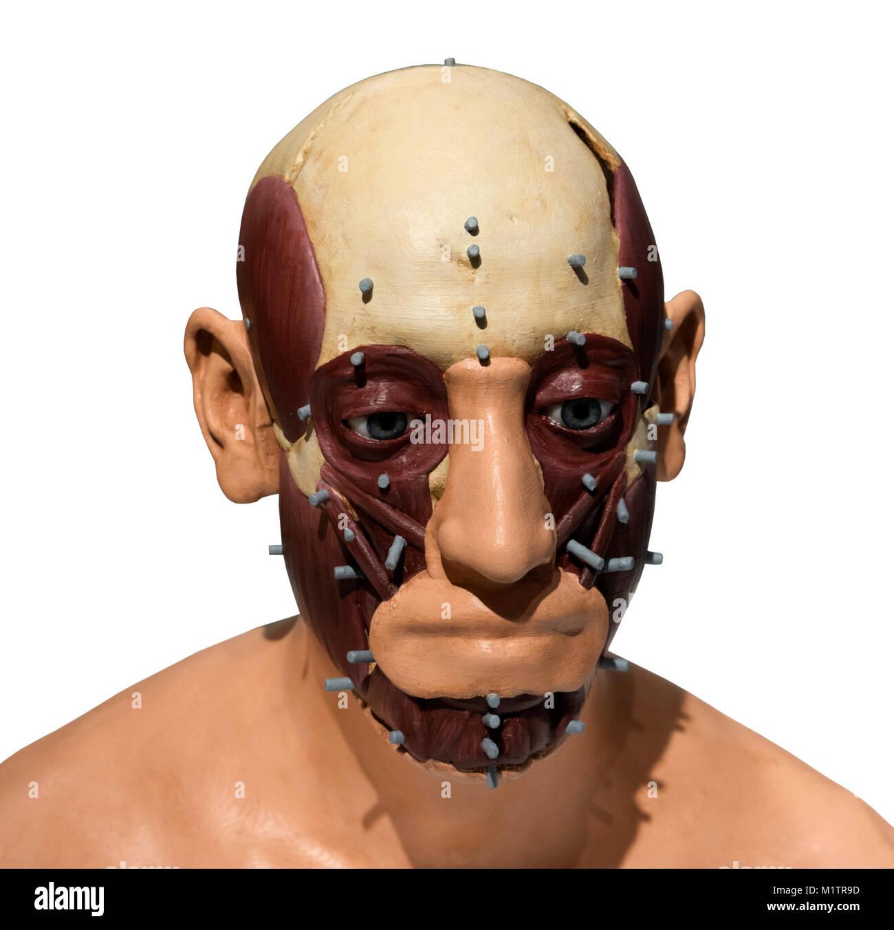 Parziale Ricostruzione facciale della testa di Richard III di Caroline Wilkinson, re Richard III Visitor Center, Immagini Stock