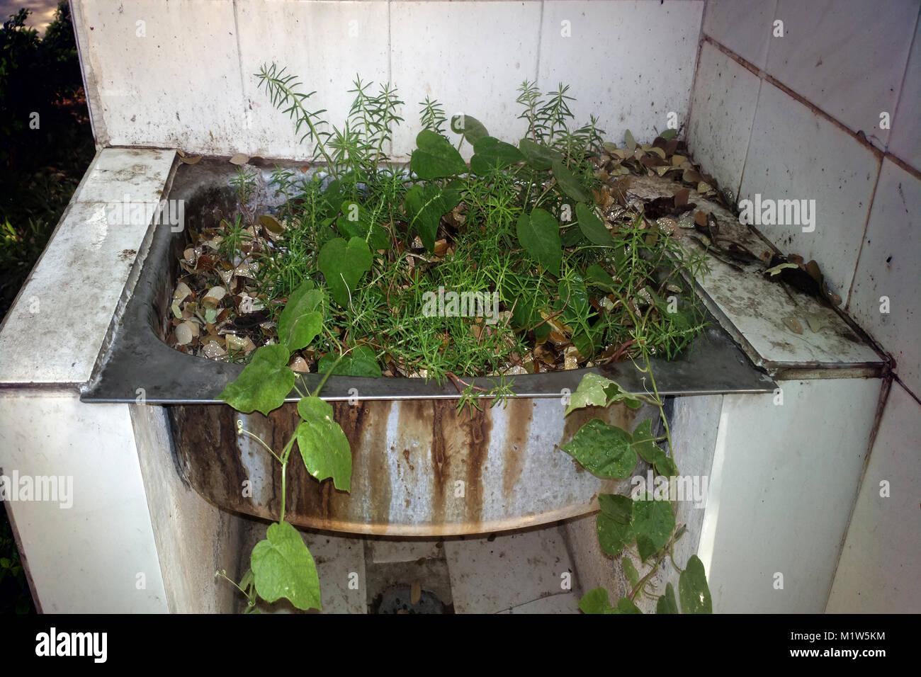Piante Strane Da Appartamento strana casa. nel bacino del dissipatore di allevamento