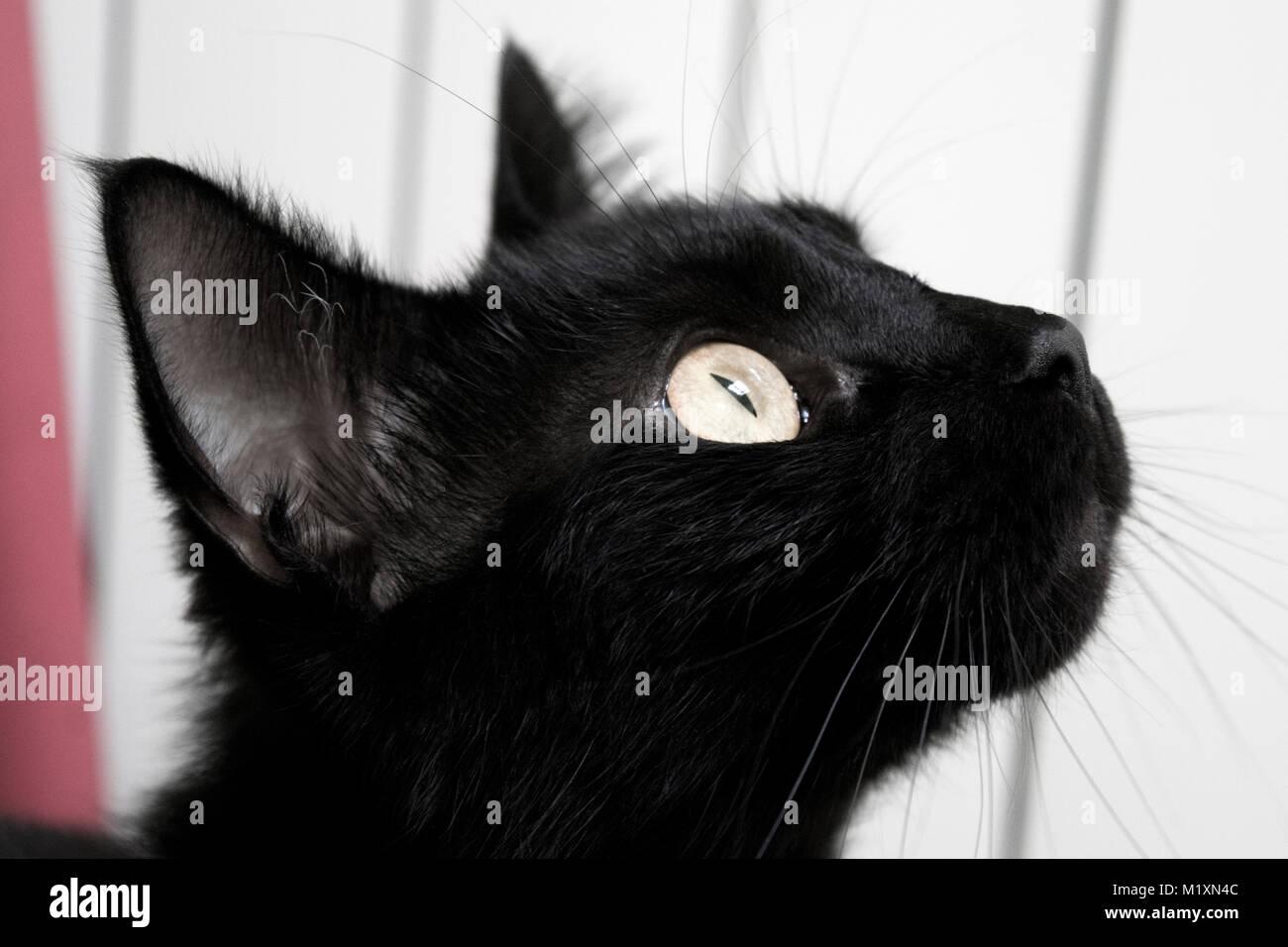 stretto nero micio foto