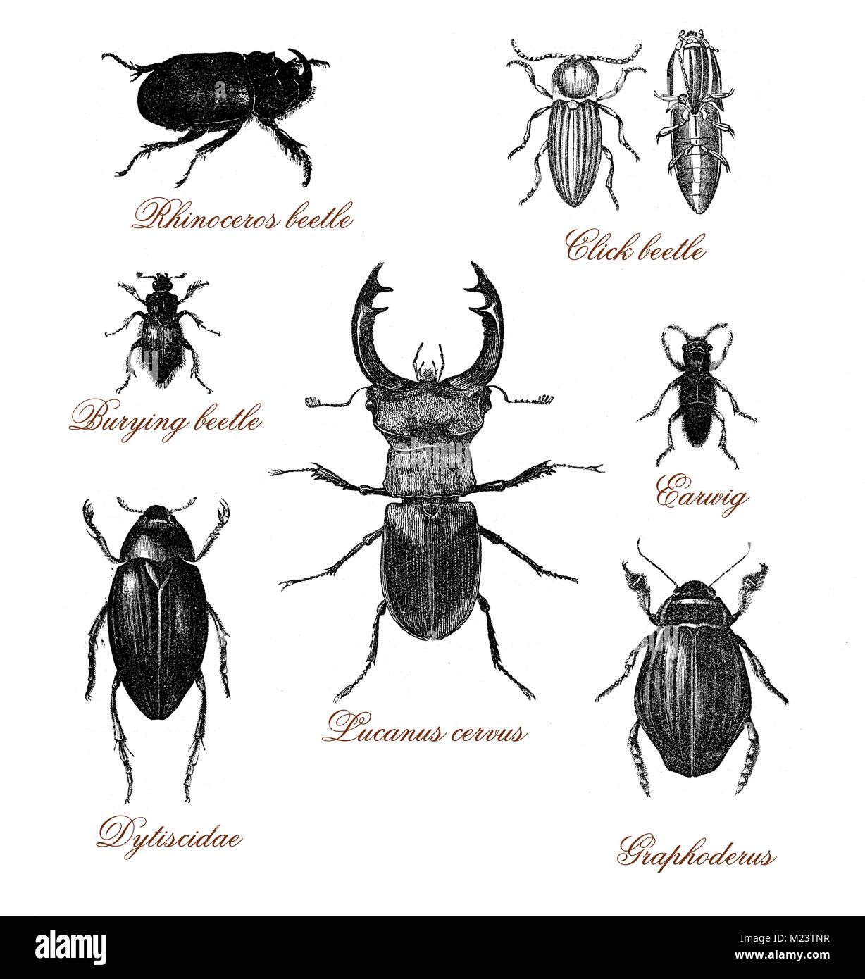 Illustrazione vintage tabella con diversi tipi di - Diversi tipi di trecce ...