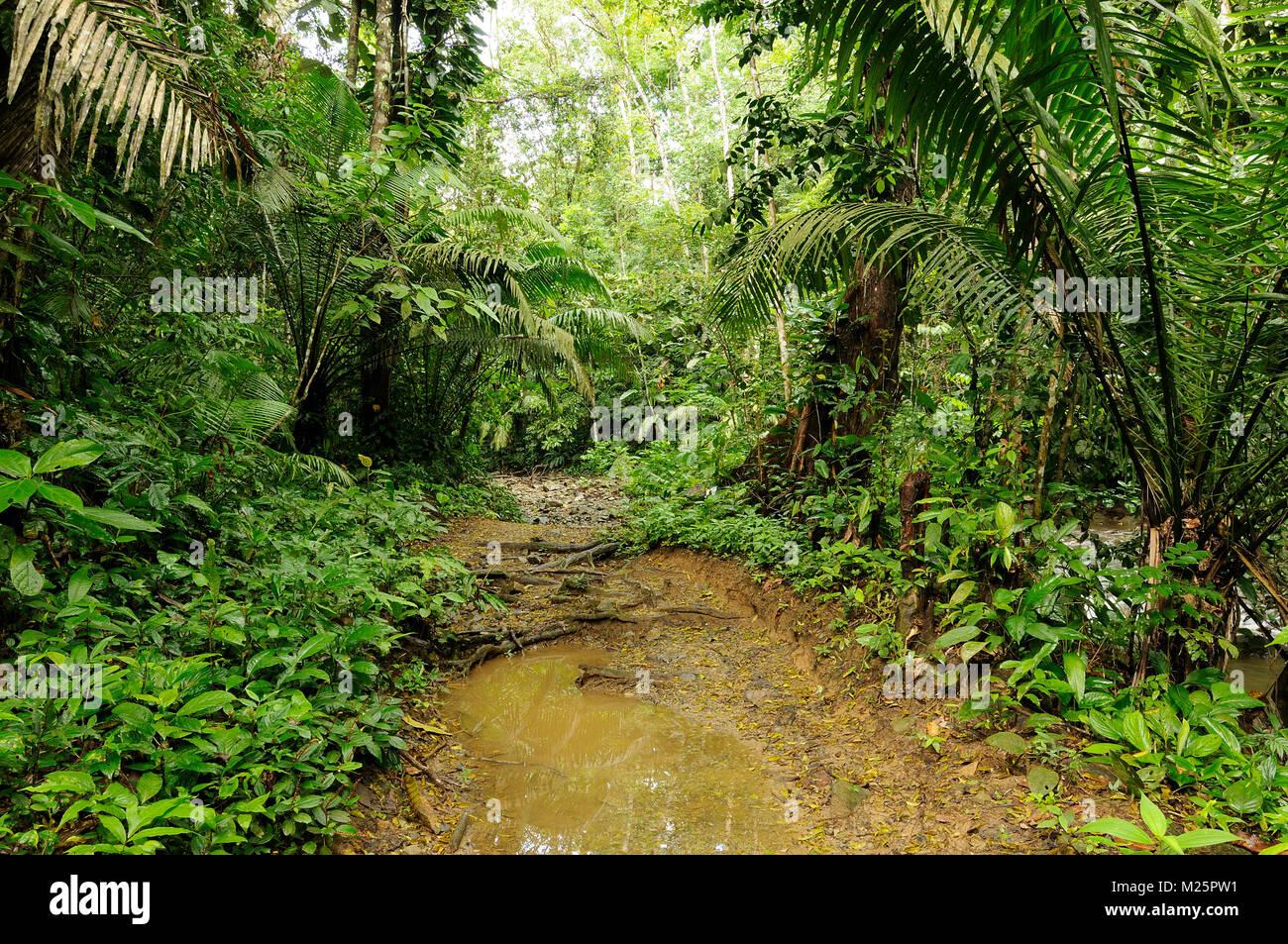Wild Darien la giungla vicino la Colombia e il Panama confine Immagini Stock