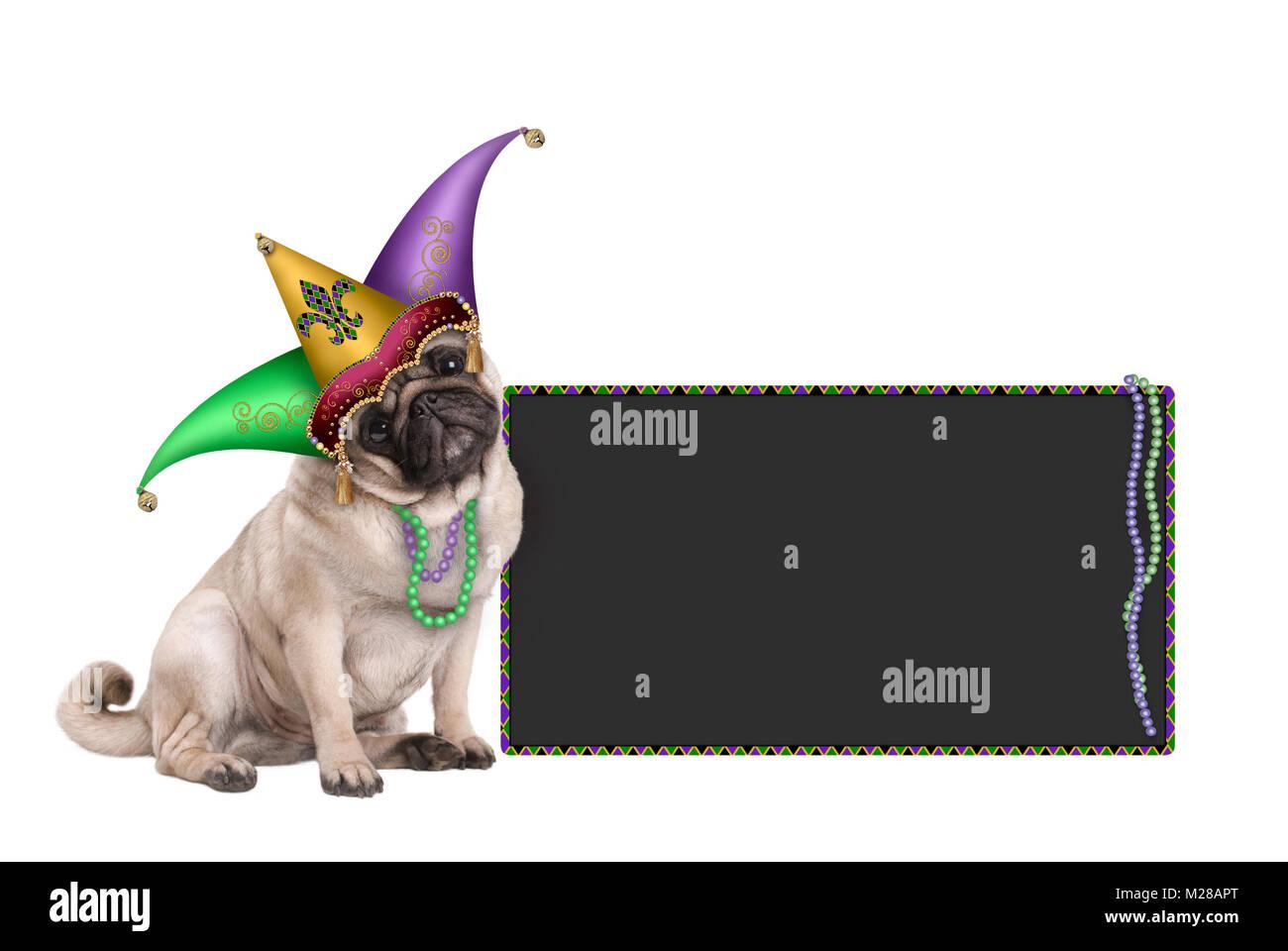 Carino il Mardi Gras carnival pug cucciolo di cane seduto con la harlequin  jester hat e 67cedc91b7f5