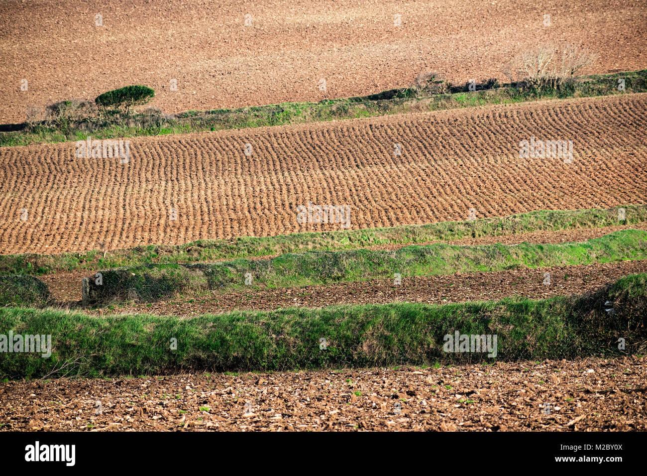Agricoltura Agricoltura, campi coltivati preparati per la semina delle colture, Cornwall, Regno Unito. Immagini Stock