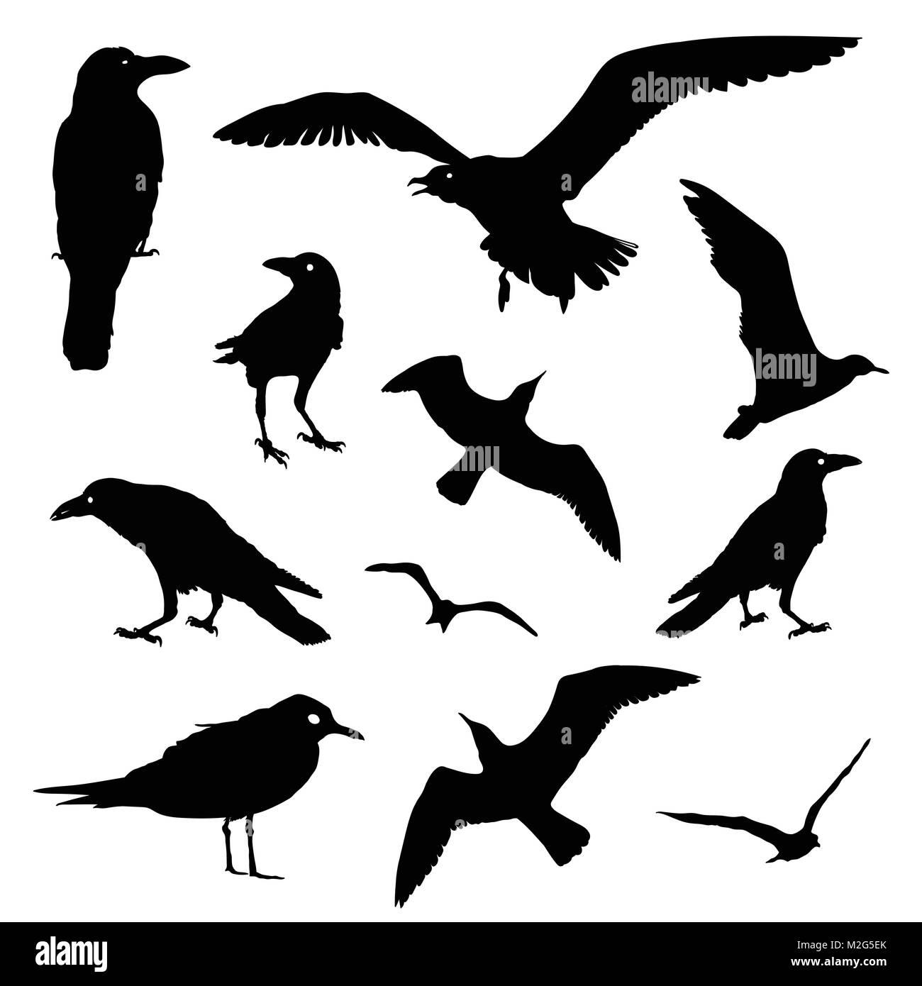 Vettore Collezione di uccelli di Silhouette. Rook, Raven ...