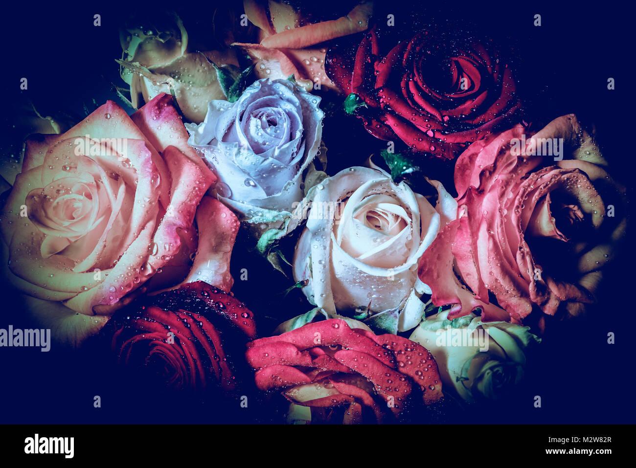 Rose colorate, mazzo di rose, simbologia, amore Immagini Stock