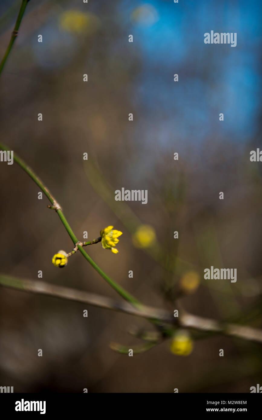 Primavera gemme, rami, blossom Immagini Stock