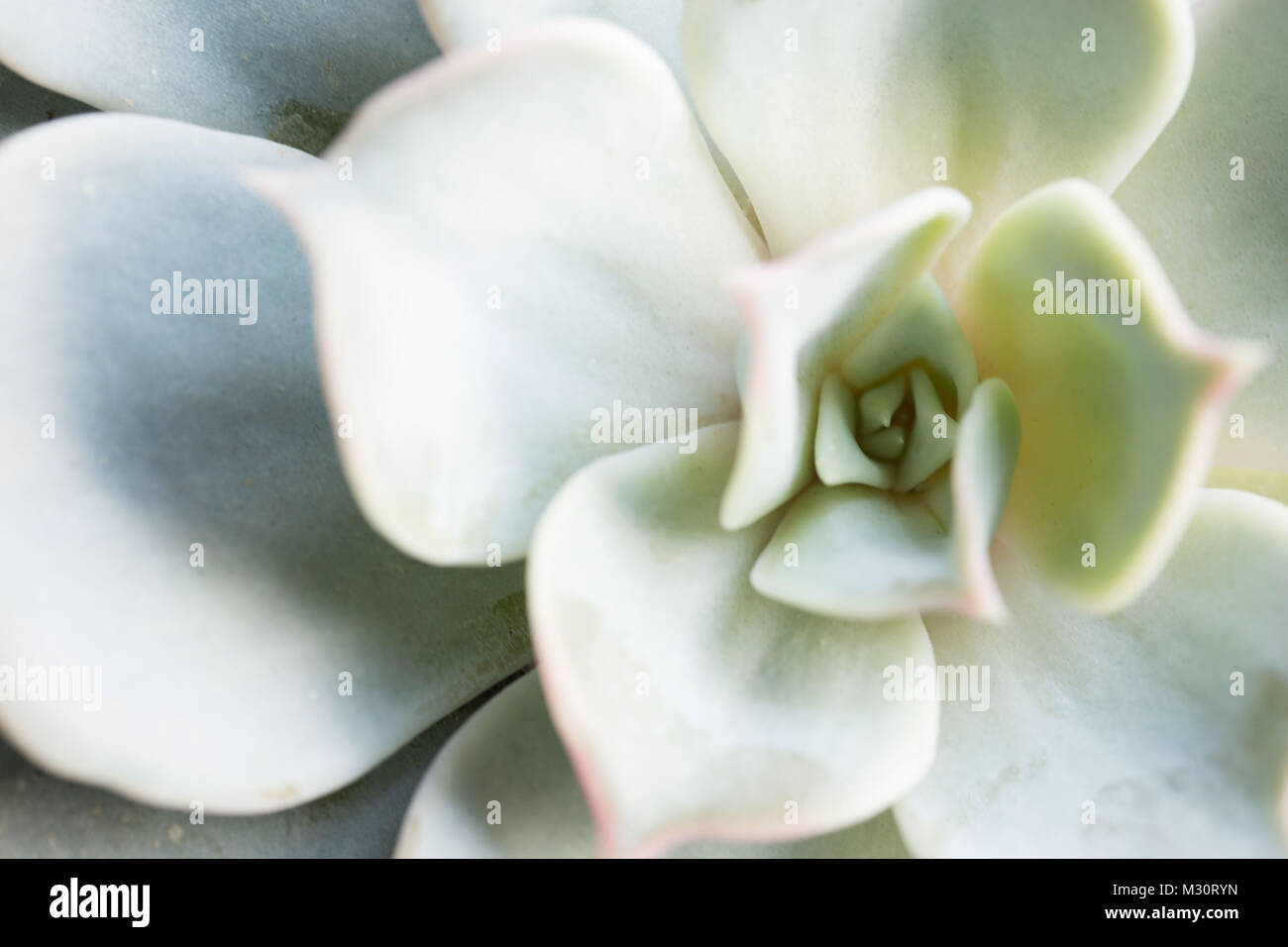 Close-up di piante succulente Immagini Stock