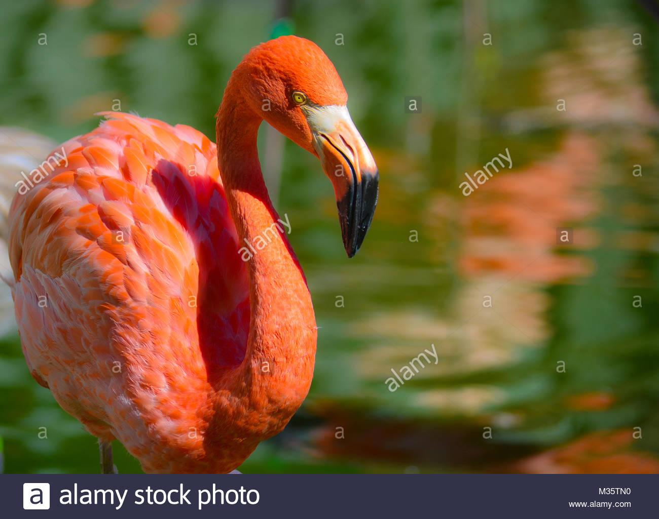 Flamingo pond Immagini Stock